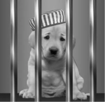 jail pup