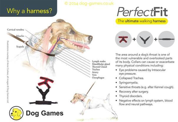 harness vs collar neck